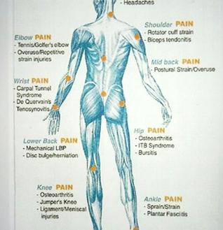 Back fit Pilates musculature